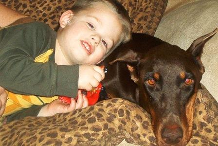 red and rust doberman with child