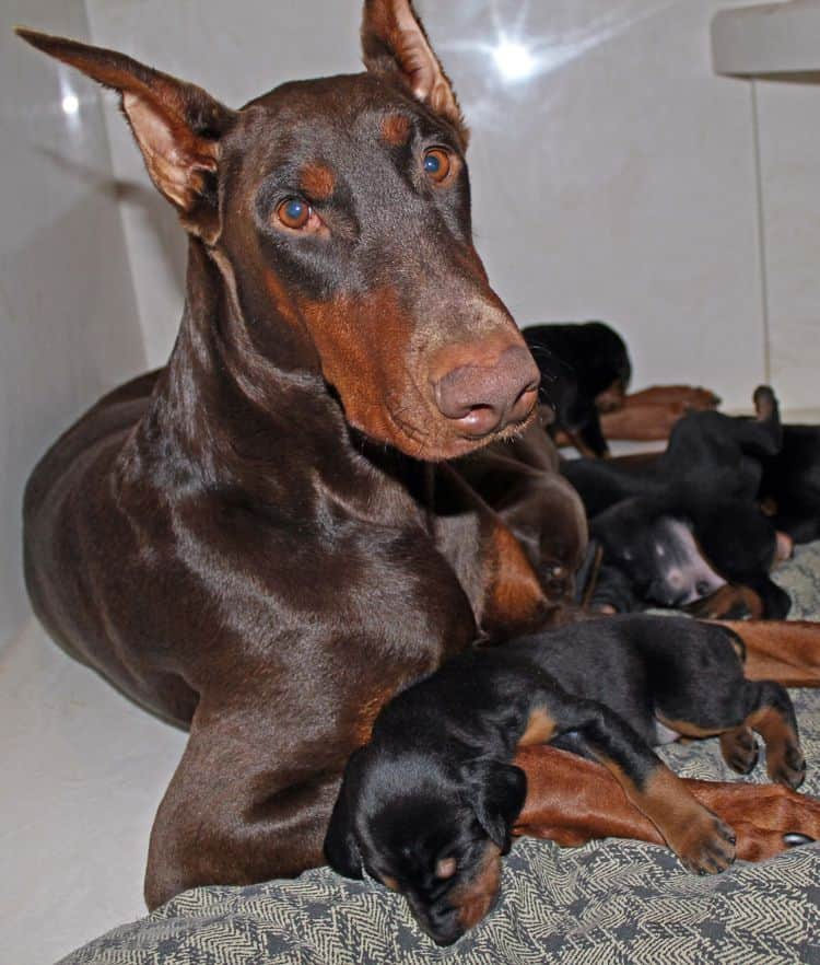 Sable's first litter. Click pic to see more from this litter.