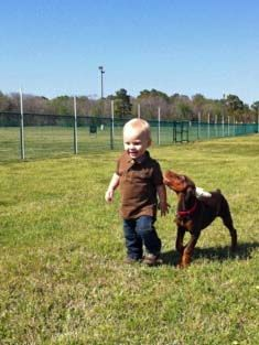 red and rust female pup with 1 year old child