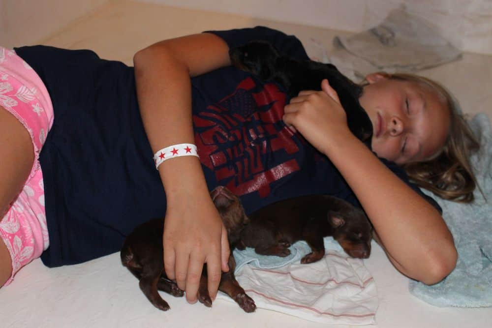 Doberman puppies sleeping with child
