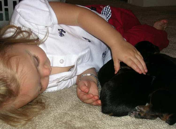 child with week old doberman puppies
